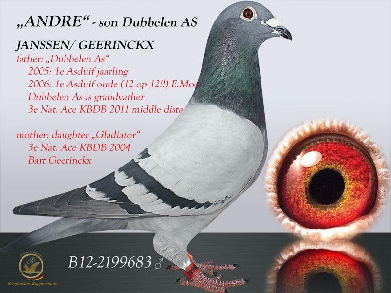 GEERINCKX