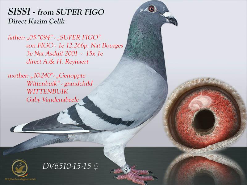 FIGO - Reynaert - Kazim Celik