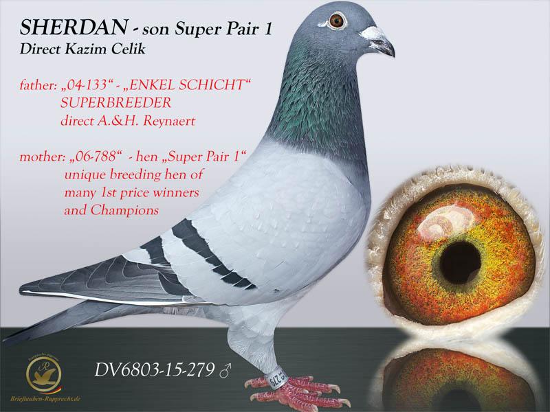 FIGO - Jonge Schicht -  Reynaert - Kazim Celik